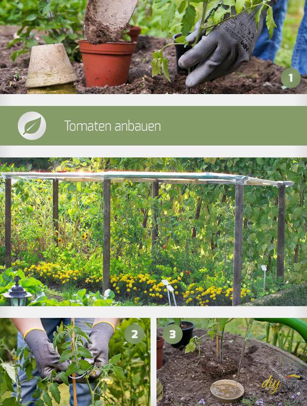 tomaten anbauen anleitung f r erfolgreichen anbau. Black Bedroom Furniture Sets. Home Design Ideas