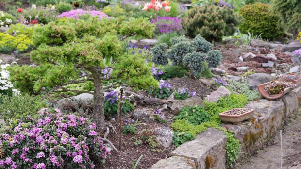 Blühende Steingartenpflanzen