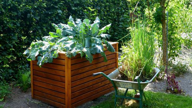 Neu aufgestelltes Hochbeet mit Bepflanzung