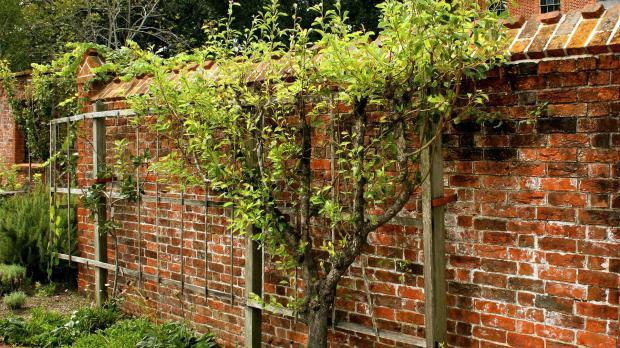 Hohe Mauern mit Bewuchs