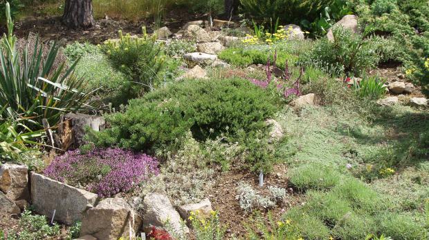 Steingarten in voller Blüte