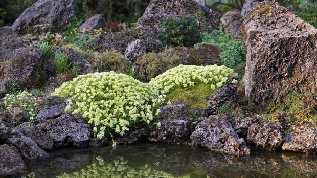 Natürlicher Steingarten