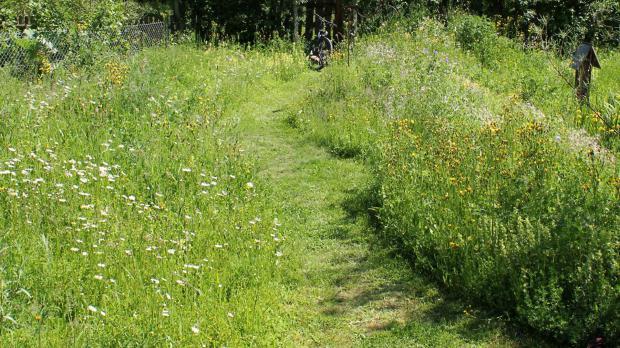 Gemähte Wege in der Blumenwiese
