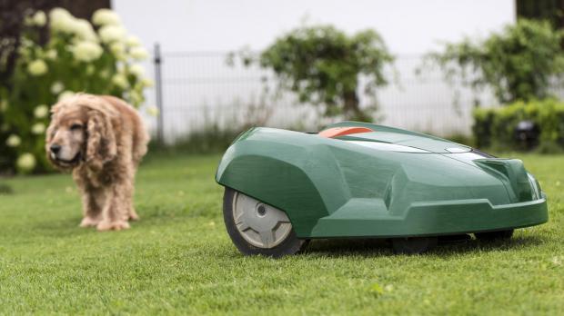 Mähroboter und Hund im Garten