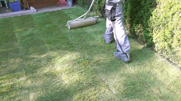 Rollrasen mit Gartenwalze überarbeiten