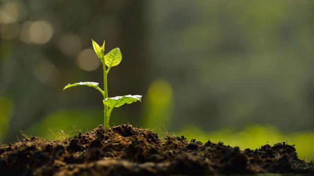 Der Gartenboden - Grundlage des Pflanzenwachstums