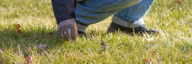 Mann der Unkrauf im Rasen aussticht