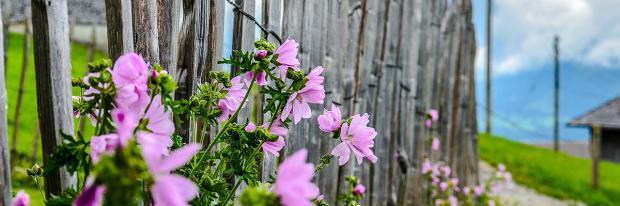 Holzzaun mit Blumen | © hschmider - pixabay.com