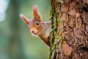 Winterfreude: Erste Hilfe für Eichhörnchen im Garten