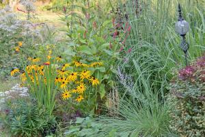 Flower Power: Saisonal den Garten verschönern