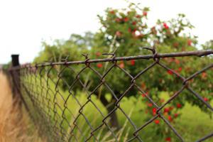 Zankapfel: Die lieben Nachbarn und die Grenzbepflanzung