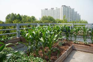 Garten mit Aussicht: Das Gründach