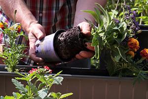 Farbe für die Balkongestaltung - Blumenkästen bepflanzen