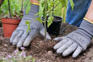 tomatenpflanzen aus dem netz ein erfahrungsbericht teil 1 in garten wohnen. Black Bedroom Furniture Sets. Home Design Ideas