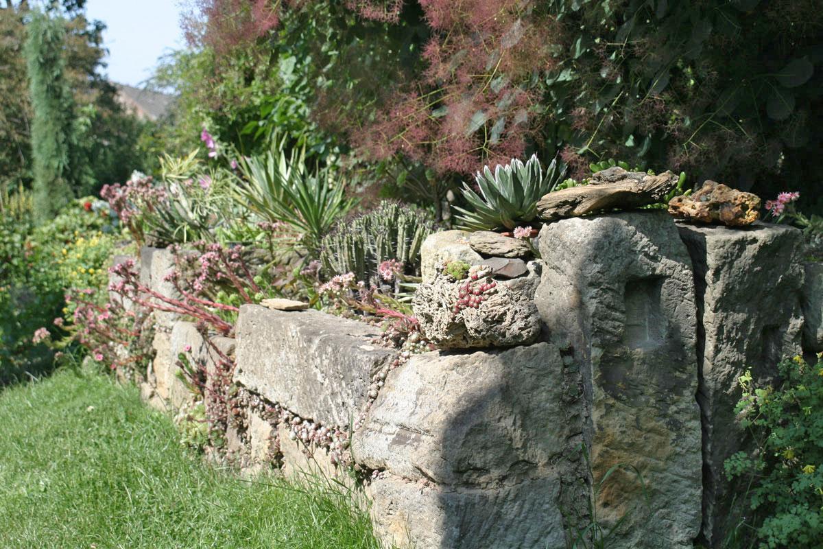 die 10 schönsten pflanzen für trockenmauer und co. - garten @ diybook.ch