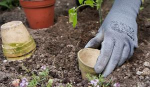 tomaten anbauen anleitung f r erfolgreichen anbau anleitung tipps vom g rtner garten und. Black Bedroom Furniture Sets. Home Design Ideas